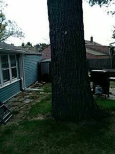 How Much To cut Down a Tree