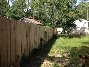Stain Privacy Fence Cover Photo
