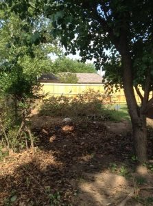 Hedge Cut And Yard Waste Removal Cover Photo