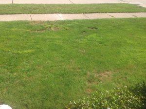 Lawn Service Cover Photo