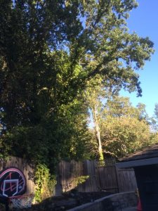 Tree Removal. 3 Trees, Cover Photo
