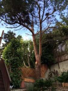 Cost of Tree Pruning