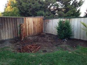 Backyard Design Ideas on a Budget