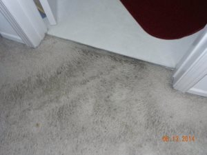 Carpet Replace Cover Photo
