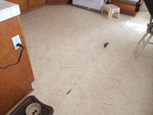 Tile Flooring Thought House Cover Photo