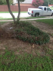 Shrub Removal Cover Photo