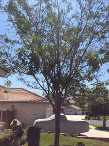 Cost of Removing a Tree