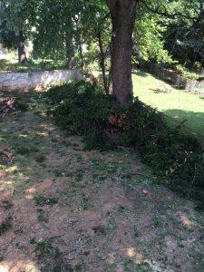 Haul Away Tree Limbs/Brush Cover Photo