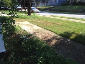 Lawn Maintenance Prices