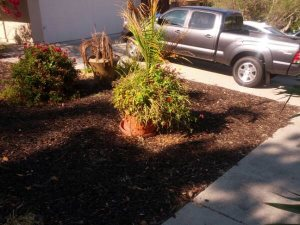 Curb Appeal for $1000 or less Cover Photo
