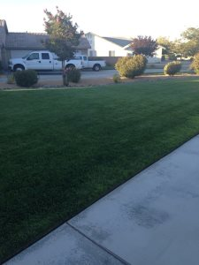 What is Landscaping