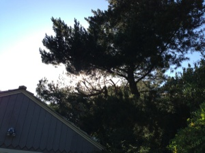 Tree Cutting Services Prices