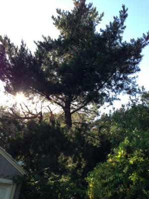 Cut 2 Pine Tree Cover Photo