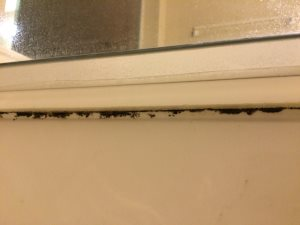 Mold And Mildew Removal Cover Photo