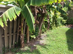 Cost of Fencing