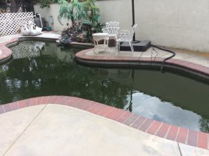Koi Pond Services Cover Photo