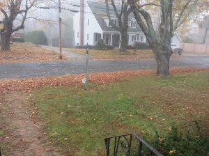 Fall Cleanup  Cover Photo