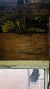 Roof Leak Cover Photo