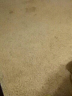Replace Carpet With Vinyl  Cover Photo