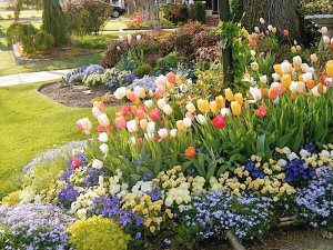 Tulips Garden  Cover Photo
