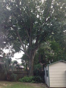 A Tree Service