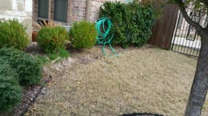 How Much Does a Sprinkler System Cost