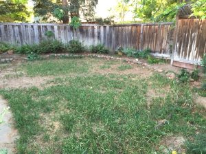Backyard Lanscaping Cover Photo