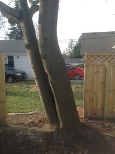 Wood Fence Cover Photo