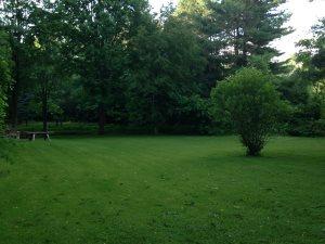Lawn Treatment Companies