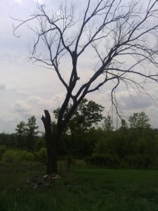 Tree Service Cover Photo