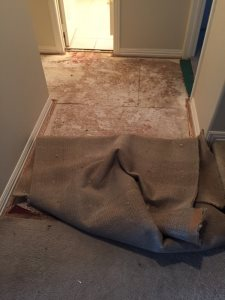 Carpet Cleaning Cover Photo