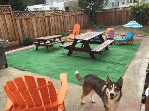 Backyard Redo- Artificial Turf Cover Photo