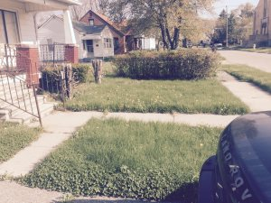 3244 Williams St Lawn Cover Photo