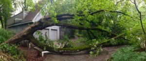 Oak Tree Removal Cover Photo
