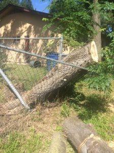 Remove Tree Trunk  Cover Photo