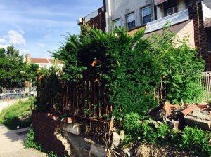 Tree Garden Cover Photo