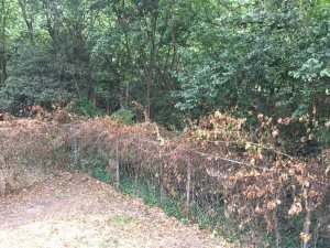 Brush And Fence Clearing Dead Poison Ivy Cover Photo