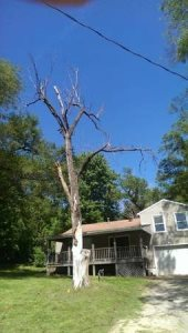Dead Tree Removal  Cover Photo