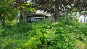 Need Overgrown Lawn Cut Back Cover Photo