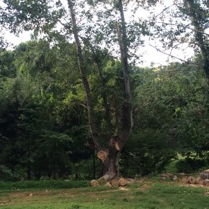 Tree Removal & Chipping Branches  Cover Photo