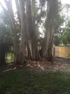 Arbor  Cover Photo