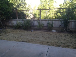 Grass & Sprinklers Cover Photo
