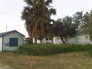 Trim Tree And Remove Waste Cover Photo