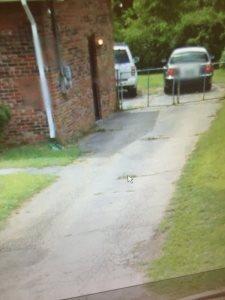 Driveway Repair  Cover Photo