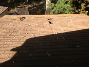 Patio Roof Cover Photo