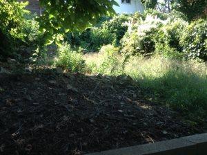 Backyard Cover Photo