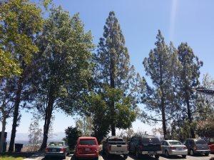 Tree Cutting Cost