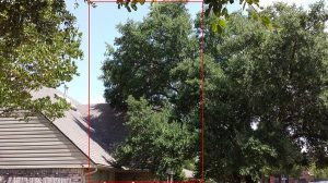 Tree Branches Cut Above House  Cover Photo
