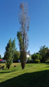 Need Tree Cut Cover Photo