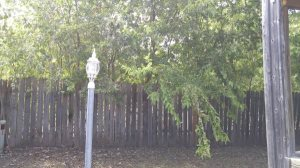 Mowing Edging Etc Mild Tree Trimming Cover Photo